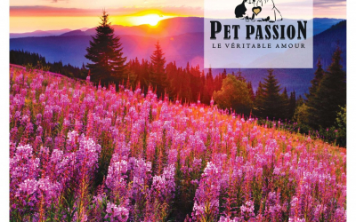Pet Passion – PDV – Vidro